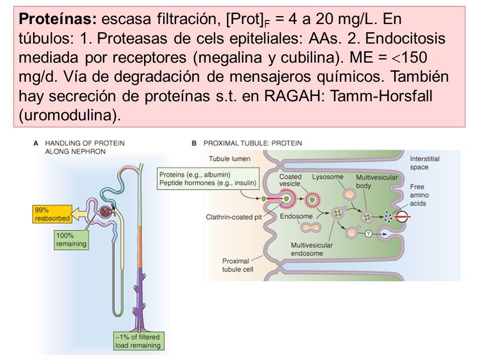 Proteínas: escasa filtración, [Prot]F = 4 a 20 mg/L. En túbulos: 1